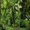 Segundo dados divulgados por pesquisa encomendada pela União Européia, a economia global perdeu mais dinheiro com o desaparecimento das florestas naturais do que com a crise financeira de 2009, algo […]