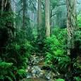 O Brasil é o segundo país com maior área de floresta no mundo e tem a maior área de floresta tropical contínua. Isso significa uma enorme responsabilidade na manutenção do […]