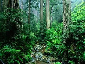 Florestas brasileiras têm enorme potencial de produção, aponta estudo