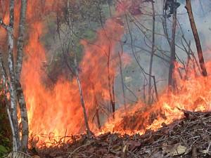 Mapa de risco de incêndios vai permitir que se tenha ideia das áreas mais suscetíveis. O departamento de Caquetá é a mais afetada pela floresta amazônica colombiana incêndios devido à expansão da agricultura e pecuária. Foto: Juan Vergel Ortiz