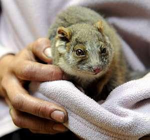 Resolução determina regras sobre os experimentos com animais