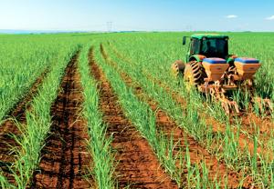 """Safra de cana foi """"um desastre total"""" e usineiros pedem redução de impostos do etanol"""