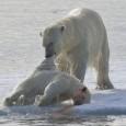 Ataques contra própria espécie estariam aumentando por causa da pressão do clima Fotos de um flagrante de canibalismo entre ursos polares divulgadas durante reunião nesta semana da União Americana de […]