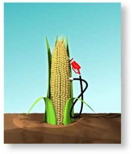 TERRAMÉRICA – Os agrocombustíveis não são a solução