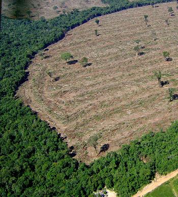 Ibama aplicou mais de R$ 3,5 milhões em multas e embargou 700 hectares desmatados ilegalmente