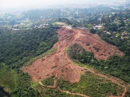Ibama embarga área de 700 hectares de desmatamento ilegal em Mato Grosso '