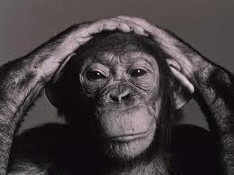 EUA limitam uso de chimpanzés em pesquisas científicas