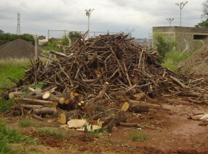 Resíduos de arborização urbana