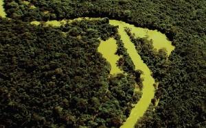 """Esta imagem é parte da publicação """"Amazônia Maranhense: diversidade e conservação"""". Bioma no Maranhão recebe pouca atenção do poder público, da ciência e da população maranhense. Crédito: Divulgação/Goeldi"""