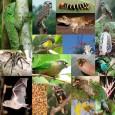 O Ministério do Meio Ambiente pretende que o Plano Nacional da Diversidade Biológica seja normativo, ou seja, tenha valor de lei. Segundo Carla Lemos, assessora técnica da Secretaria de Biodiversidade […]
