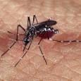 O estado do Rio de Janeiro teve 168.242 casos de dengue registrados em 2011. Durante todo o ano, 140 pessoas morreram vítimas do vírus da doença. A Secretaria de Estado […]