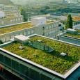 Eles absorvem água da chuva, agem como isolantes térmicos, reduzem o consumo de energia e, de quebra, embelezam a cidade. Cada vez mais, os ecotelhados ou telhados verdes ganham adeptos […]