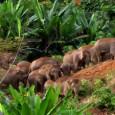 """O elefante de Sumatra, uma das ilhas que formam a Indonésia, desaparecerá """"em menos de 30 anos"""" se ninguém impedir a destruição de seu habitat natural, advertiu nesta terça-feira (24) […]"""