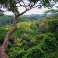 O mecanismo proposto para reduzir as emissões de gases do efeito estufa protegendo as florestas tropicais evoluiu consideravelmente desde que começou a ganhar força durante as negociações climáticas de 2005 […]