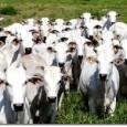 Equipes paranaenses de fiscalização sanitária vão trabalhar 24 horas nos postos de inspeção da área de fronteira para evitar a entrada de gado com aftosa no país. Além disso, o […]