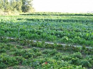 Agricultura sustentável é essencial, diz estudo