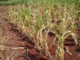Seca no Rio Grande do Sul compromete lavouras, pastagens e produção de hortigranjeiros