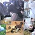 Dez mil brasileiros aderiram à campanha de mobilização global da Sociedade Mundial de Proteção Animal (WSPA, sigla em inglês) que irá pedir à Organização das Nações Unidas (ONU) a inclusão […]