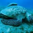 Cientistas norte-americanos divulgaram que as áreas de preservação dos oceanos, onde a caça e a pesca não são permitidas, precisam ser móveis para proteger as espécies marinhas. A ideia de […]