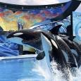 Cinco orcas foram nomeadas como autoras de um processo na Justiça americana que argumenta que elas têm os mesmos direitos de proteção contra a escravidão que humanos. A organização de […]