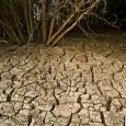 O problema ambiental não está apenas na água ou no ar. De acordo com um relatório da Nações Unidas, 24% do solo do planeta já sofreu algum tipo de deterioração. […]