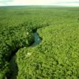 Paulo Adario, diretor da Campanha Amazônia do Greenpeace, recebe da ONU o título de 'herói da floresta' na América Latina por sua luta pela defesa da Amazônia O ambientalista brasileiro […]