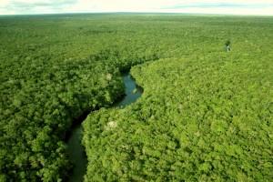 'As florestas estão em seriíssimo risco', diz ambientalista