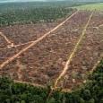 Estudo mostra que corte de vegetação nativa é mais intenso no Cerrado O ritmo de desmatamento nos biomas Mata Atlântica, Pantanal e Pampa caiu entre 2008 e 2009. Na Mata […]