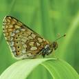 Uma organização ambiental da Europa lançou um guia com orientações sobre como preservar espécies de borboletas que vivem no continente e são consideradas ameaçadas de extinção. O relatório, que teve […]