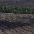 Às vésperas da Rio+20 e com a votação do Código Florestal estagnada por conta de desentendimentos entre o Congresso e o governo, que não aceita alterações no texto que veio […]