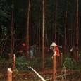 Uma fazenda de 1,15 mil hectare da empresa Suzano Papel e Celulose, localizada no município de Alcobaça, no sul da Bahia, foi invadida quinta-feira (01) por cerca de mil mulheres […]