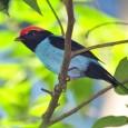 """As mudanças climáticas podem causar a extinção de 900 aves de regiões tropicais em todo mundo até o fim do século, adverte estudo recém-publicado na revista """"Biological Conservation"""". O Brasil […]"""