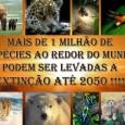 01 – Tigre Novos levantamentos indicam que existem menos de 3,2 mil tigres na natureza. Hoje, só restam apenas 7% do habitat natural destes animais. O extermínio dos tigres também […]