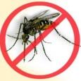 O Ministério da Saúde anunciou que os casos notificados de dengue no Brasil foram reduzidos em 66% no começo do ano. Apenas os estados de Mato Grosso, Pernambuco e Tocantins […]