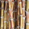 Hoje, são produzidas em média 84 toneladas de cana por hectare de terra plantada no País; cientistas estimam que melhoramento genético potencialize 380 toneladas Um novo método de análise estatística […]