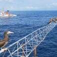 O movimento das marés e a elevação dos oceanos são os principais elementos analisados pelas medições feitas por equipamentos instalados no arquipélago de São Pedro e São Paulo pelo Instituto […]
