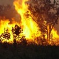 A ministra do Meio Ambiente, Izabella Teixeira, assinou portaria publicada na edição de hoje (20/03) no Diário Oficial da União que declara estado de emergência ambiental em 18 estados. São […]