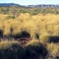 As mudanças climáticas podem ser responsáveis por diversas alterações ambientais em muitas partes do mundo, mas não causaram a extinção da megafauna australiana e a transformação da vegetação local de […]
