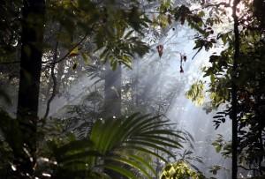 Ver a Amazônia na sua intimidade