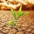 A Convenção Quadro das Nações Unidas para Mudanças do Clima (UNFCCC) recebeu oficialmente nesta segunda-feira (16) as inscrições da Alemanha, México, Namíbia, Polônia, Coreia do Sul e Suíça para ser […]