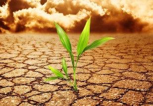 Seis países se candidatam para sediar Fundo Climático Verde