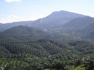 Plantações de palmeiras de óleo e florestas na Malásia.