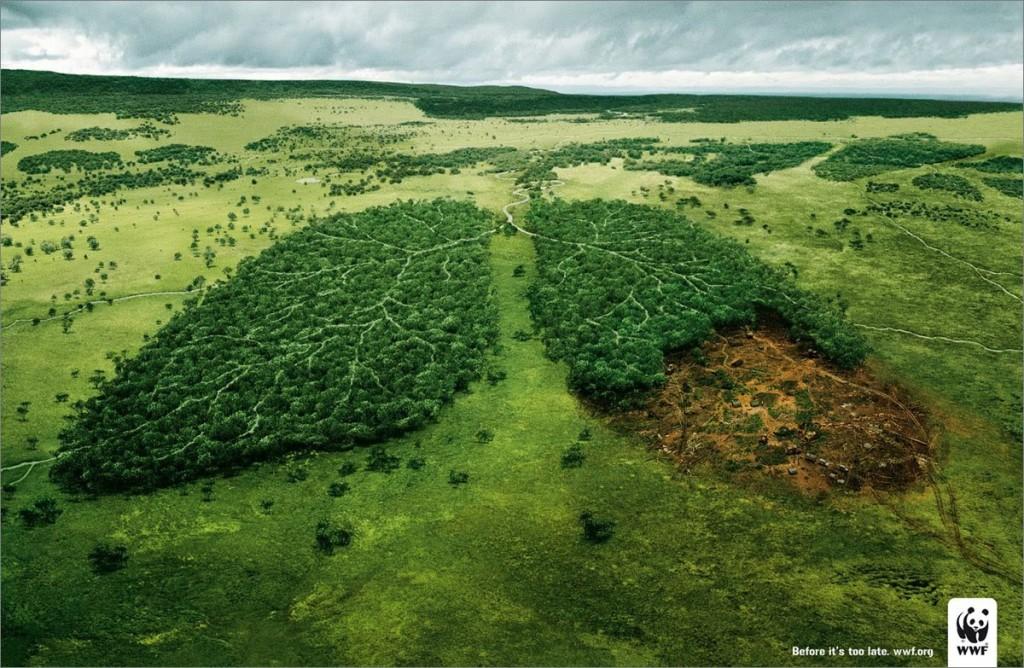Código Florestal: votação deverá ser dia 24 de abril