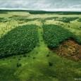 A Câmara dos Deputados aprovou nesta quarta-feira (25) o texto-base do projeto que modifica o Código Florestal, com pontos defendidos por ruralistas e sem as mudanças feitas a pedido do […]