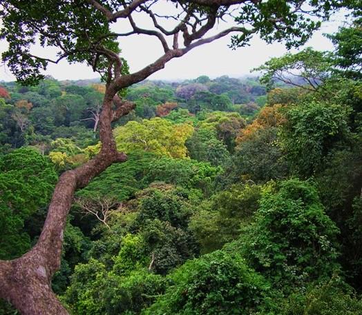 Entidades catarinenses pedem veto ao Código Florestal