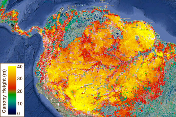NASA atualiza mapa da altura florestal global