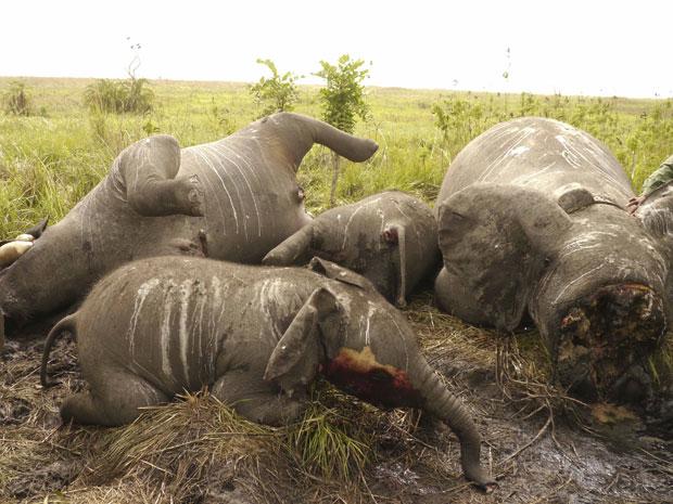 Ataque foi feito em parque nacional na República Democrática do Congo. Em 2011, número de apreensões de marfim bateu recorde.