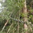 O novoCódigo Florestalprecisa prever, claramente, o impedimento de registro e aquisição de terras por produtores que cometeram crimes ambientais no país, se quiser efetivamente servir de instrumento para reduzir o […]