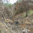 A Polícia Militar (PM), através da Companhia Independente de Policiamento do Meio Ambiente (Cipoma), descobriu uma área de degradação ambiental em uma fazenda no município de Canhotinho, no Agreste de […]