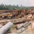 O desmatamento em Roraima e Mato Grosso disparou entre agosto de 2011 e março deste ano em comparação com o período compreendido entre agosto de 2010 e março do ano […]